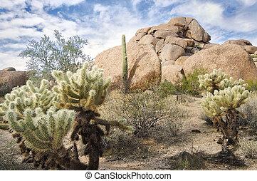 美しい, 砂漠の 景色
