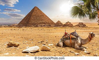 美しい, 砂漠, menkaure, 景色, エジプト, らくだ, ピラミッド