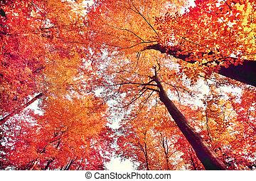 美しい, 秋の森林