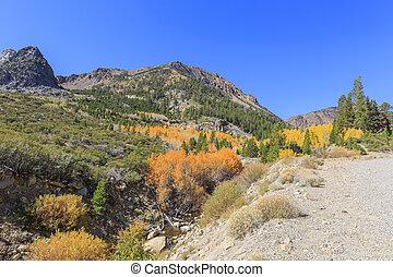 美しい, 秋の色, 中に, カリフォルニア