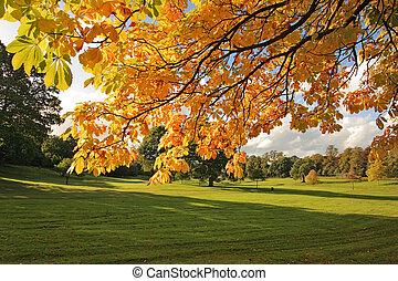美しい, 秋, スコットランド