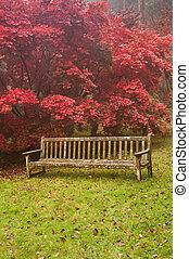 美しい, 秋, 秋, 自然, イメージ, 風景