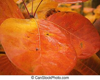 美しい, 秋, 背景, 群葉