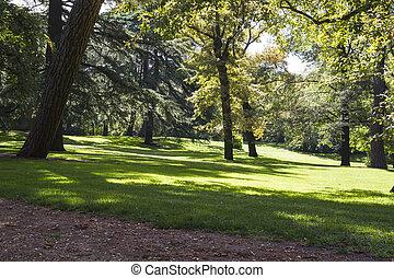 美しい, 秋, 葉が多い, 公園, 木