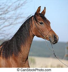 美しい, 秋, 馬, アラビア人