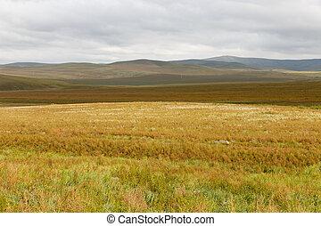 美しい, 空, 曇り, ステップ, mongolian, 風景