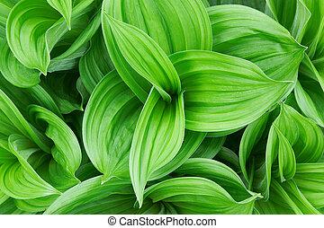 美しい, 終わり, 植物, 緑, の上