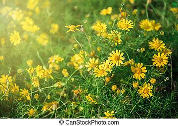 美しい, 終わり, 花, の上, 黄色