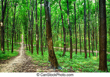 美しい, 緑の森林