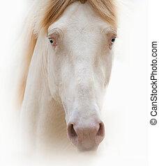 美しい, 肖像画, 馬, cremello