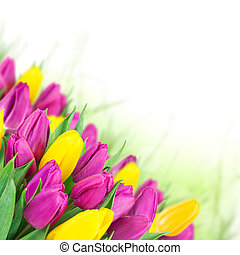 美しい, 花束, tulips.