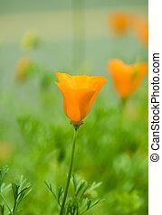 美しい, 花, チューリップ, 黄色, バックグラウンド。, sunlight., ビューの下で