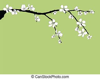 美しい, 花, ブランチ, さくらんぼ