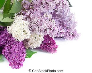 美しい, 花, ボーダー, ライラック