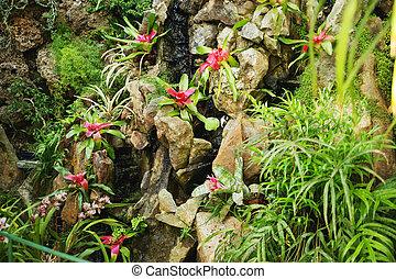 美しい, 花, 成長する, 中に, 熱帯熱帯雨林