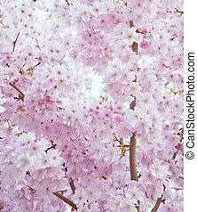美しい, 花, 春, イメージ, 高く, 明るい, キー