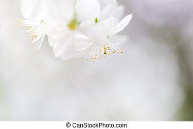 美しい, 花, 木, 自然