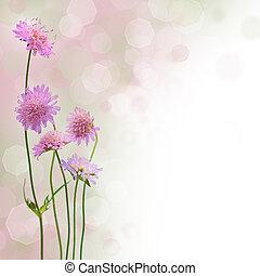 美しい, 花, (shallow, -, ぼんやりさせられた, 深さ, field), 背景, 春の花, ボーダー