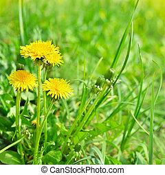美しい, 芸術, タンポポ, 春, 黄色の背景, 花