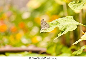 美しい, 蝶, 花