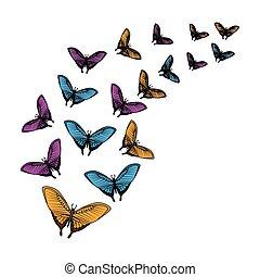 美しい, 蝶, 飛行, グループ