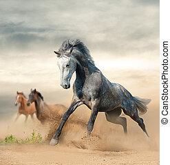 美しい, 野生の 馬, 上に, 自由