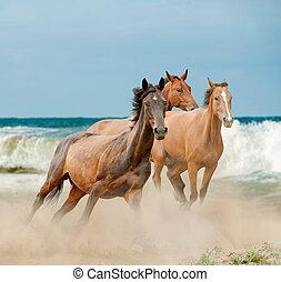美しい, 野生の 馬, 動くこと, によって, ∥, 海