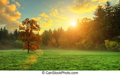 美しい, 金, 有色人種, meadow., 木, 秋