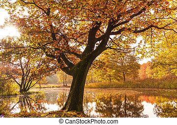 美しい, 金, 美しさ, 自然, autumn., 秋, scene., 秋, park., 風景