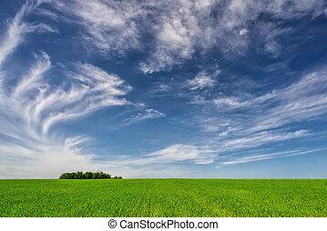 美しい, 青い空, -, 緑の草, 風景