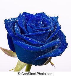 美しい, 青, バラ, ∥で∥, 水滴