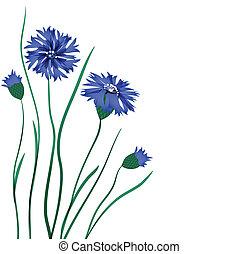 美しい, 青, cornflower, 隔離された, 背景, 白