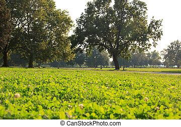 美しい, 風景, の, 緑の芝生, ∥で∥, 木, パークに