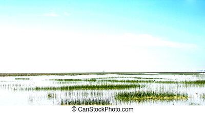 美しい, 風景, の, a, 沼地