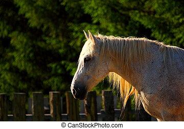 美しい, 馬, 夕闇