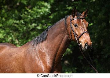 美しい, 馬, 添え金, potrait
