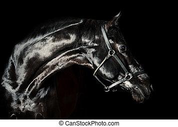 美しい, 馬, 黒, 低いキー, 肖像画
