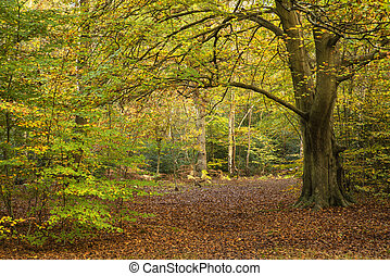 美しい, 鮮やか, 金, 秋, 秋, 森林, 風景