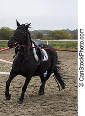 美しい, 黒い馬, gallops, 上に, 活躍の舞台