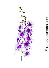 美しい, bouguet, 隔離された, 白い花, 蘭