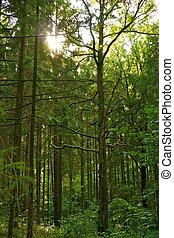 美しい, forest.