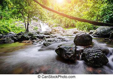 美しい, forest., 滝, 海原