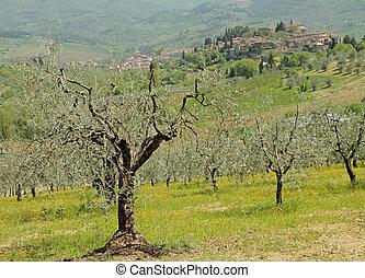 美しい, tuscan, 風景
