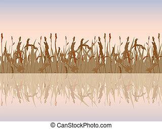 美しい, waterside., 日没, 牧草地