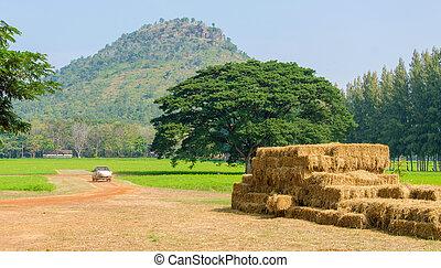 美丽, 乡村, 树, 山, 干草堆, 风景