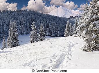 美丽, 冬天风景, 在山