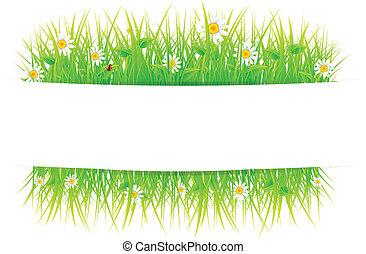 美丽, 夏天, 草地