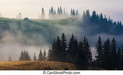 美丽, 夏天, 风景, 在山