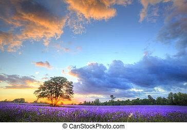 美丽, 形象, 在中, 令人震惊, 日落, 带, 大气, 云, 同时,, 天空, 结束, 振动, 成熟, 淡紫色,...
