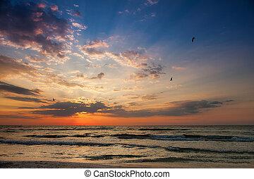 美丽, 日出, 在海滩上, 带, 海鸥